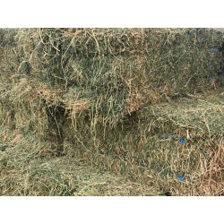 Small Crop Of Hay Vs Straw