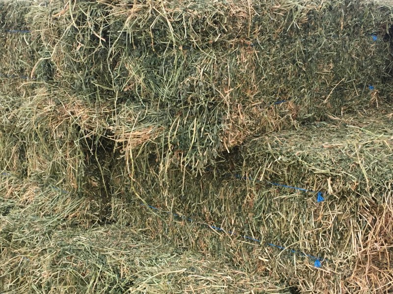 Large Of Hay Vs Straw