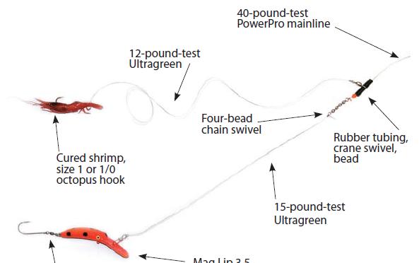 Cowlitz salmon steelhead shotgun rig for River fishing rigs
