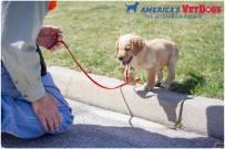 America's Vet Dogs - Puppy Friday