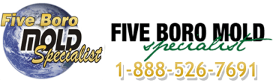 NYC Mold Removal Services – NYC mold removal