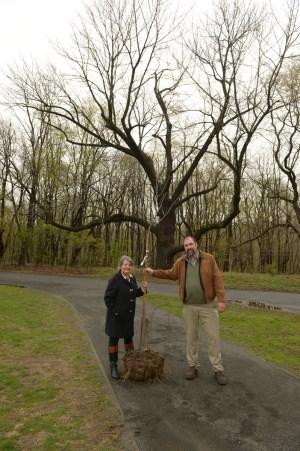 MCP_4611 Great Tree Clone Planting 5 1 14 mp_resize