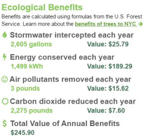 NYC pagoda tree benefits