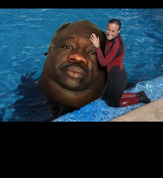 fat seal man the best my fave meme funny pics gifs cool stuff funny pics amazing cool stuff  Laugh to ya shart (33 weekly best pics)