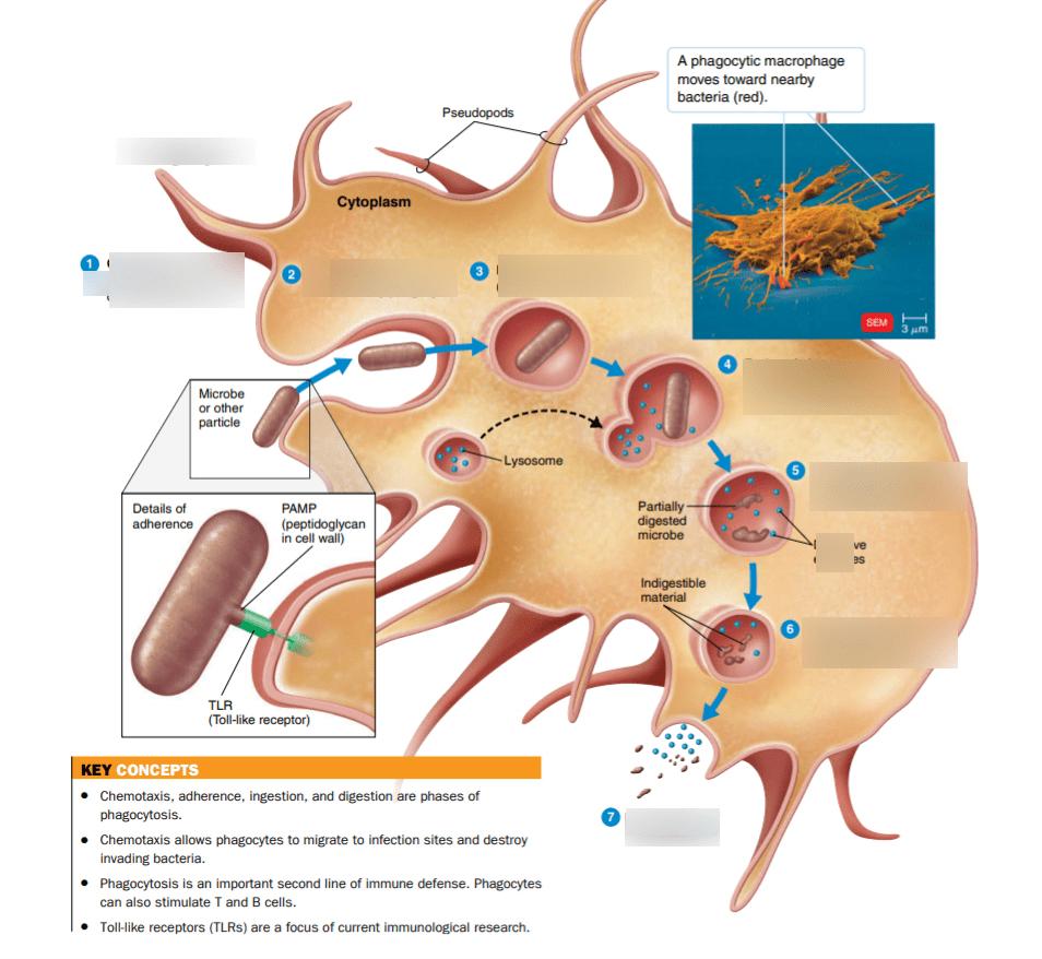 Microbio Final Exam Diagram Quizlet