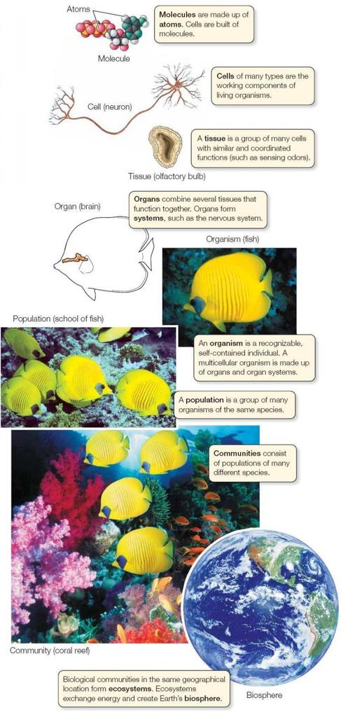 Levels of Biological Organization Diagram Quizlet