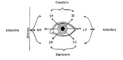 eye diagram quizlet