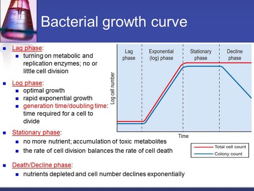 Lecture 16 Microbial Growth and Cultivation Flashcards Quizlet