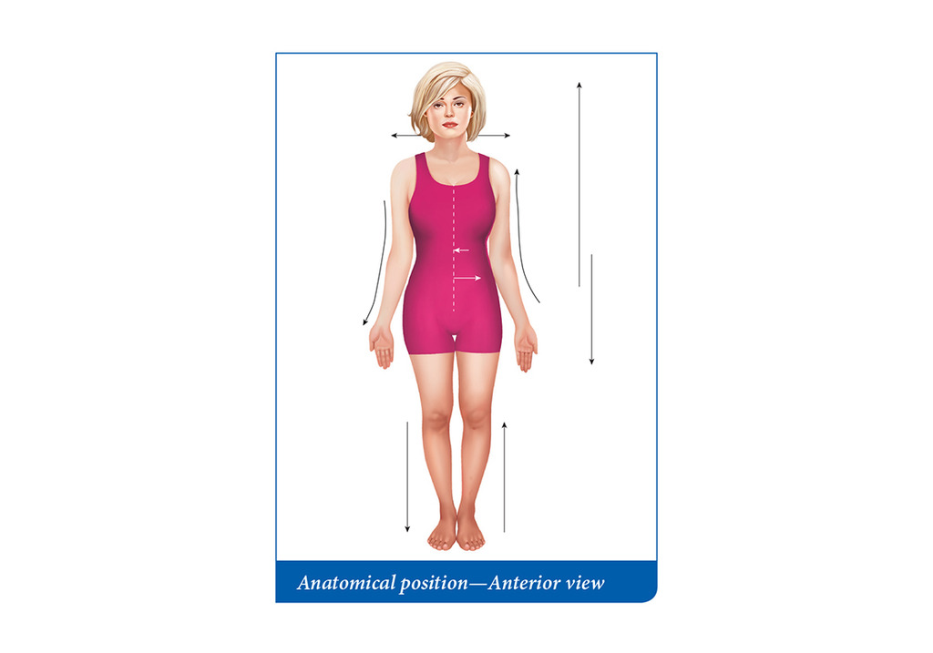 Anatomical position pt 2 Diagram Quizlet