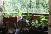 Apartment Gardening | Living in the O