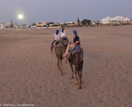 Sept24_CamelsSunset-13