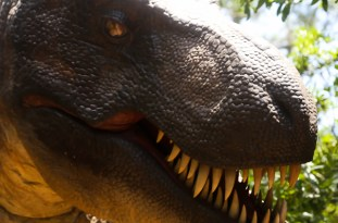 NC Aquarium Tyrannosaurus Trek on Roanoke Island, June 19, 2015 (photo by OBXentertainment.com)