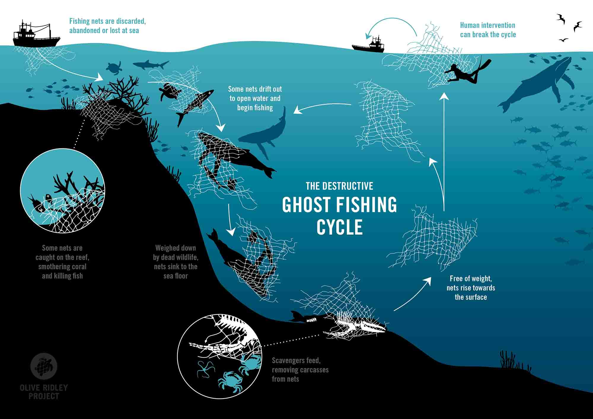 Let s ghost fishing for halloween oceanbites for Ocean fishing gear