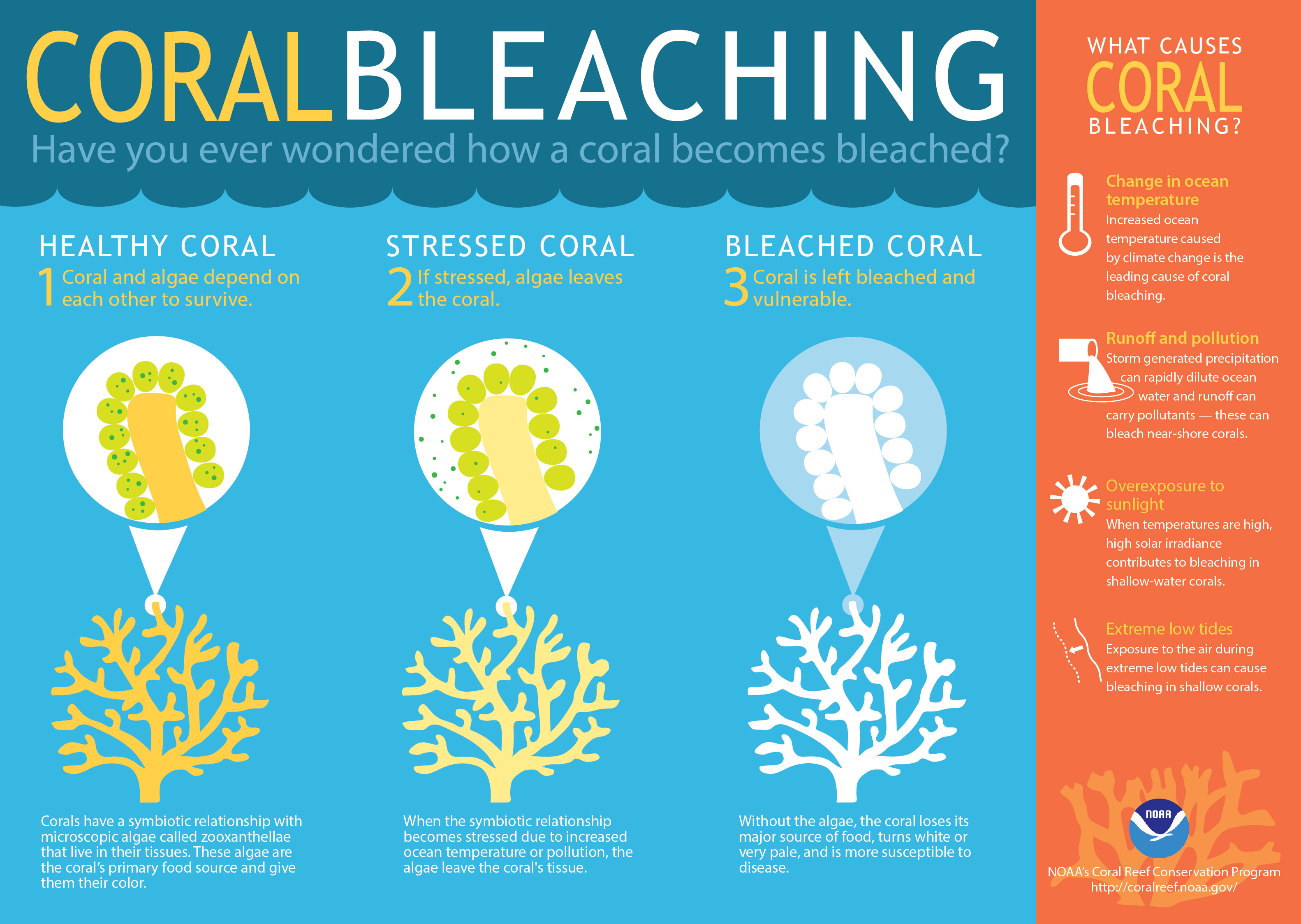 What Is Coral Bleaching