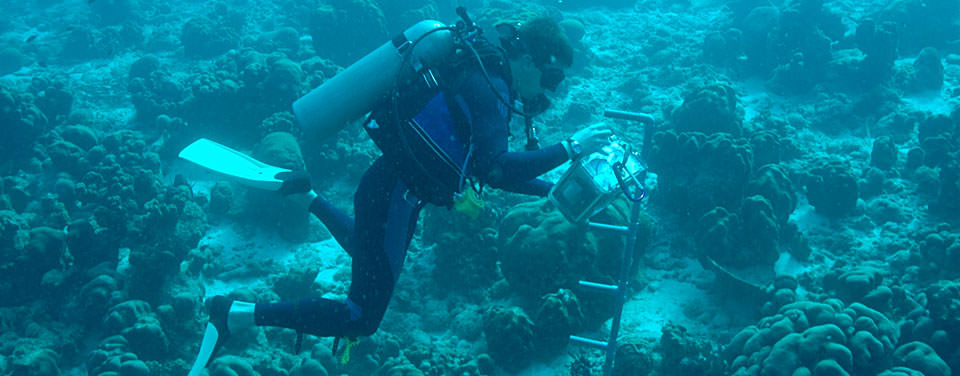 What does an oceanographer do?