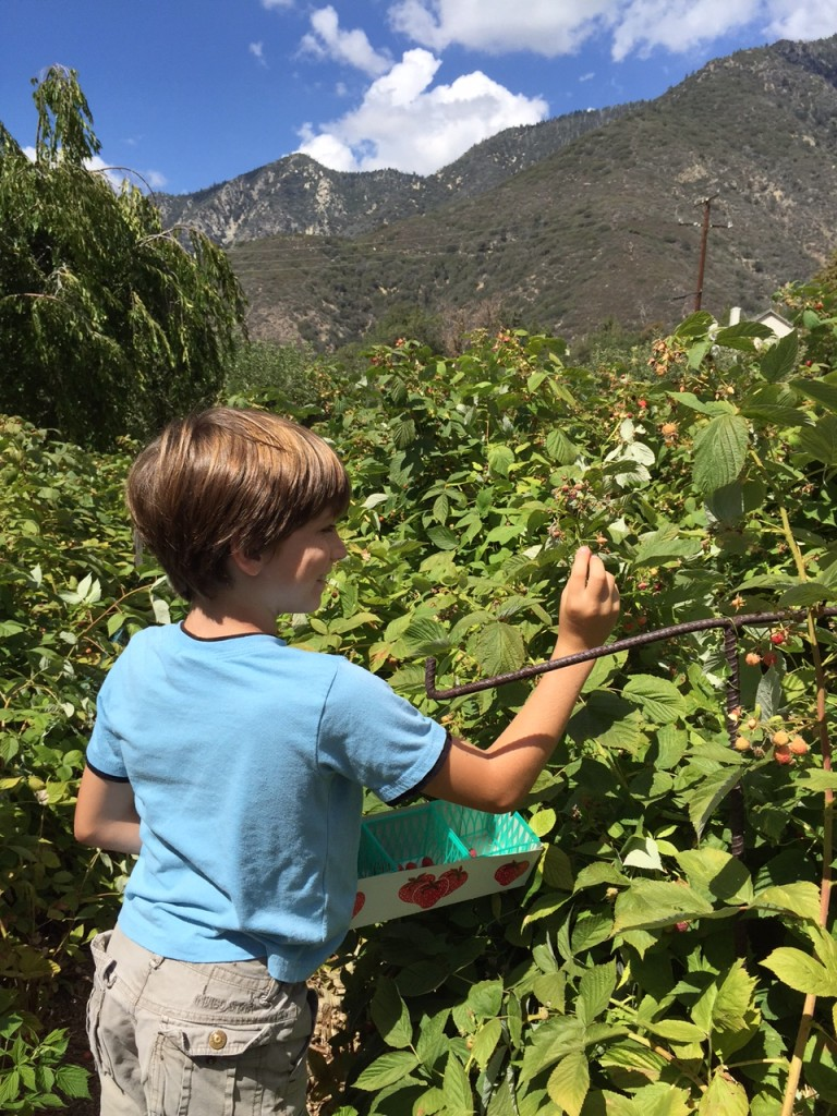 Berry Picking And Apple Cider Mini Donuts At Snow Line