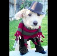 GunBroker.com Message Forums - What Do Dogs Have ...