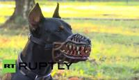This Werewolf Muzzle Might Be The Coolest Halloween ...