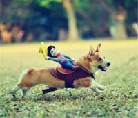 Rodeo Cowboy Dog Costume