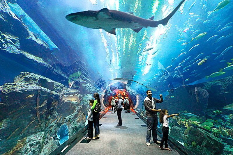 Hd Air Jordan Wallpaper Dubai Aquarium Amp Underwater Zoo And Sega Republic Dubai