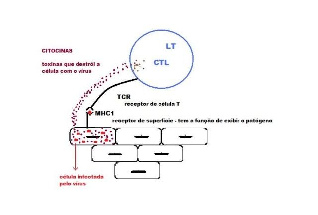 imunidade1