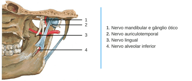 nervos ATM