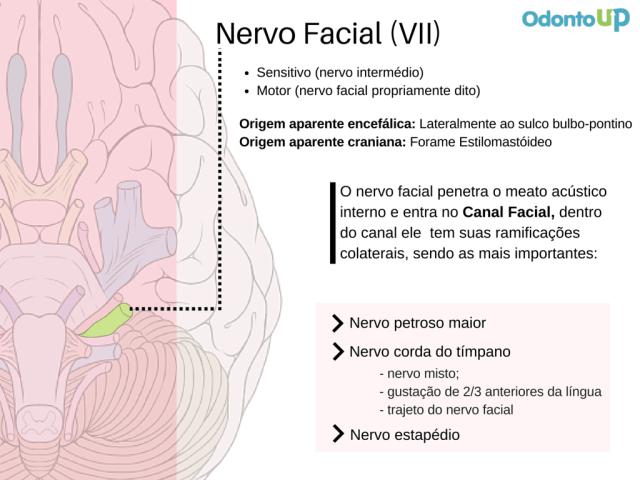 Nervo Facial