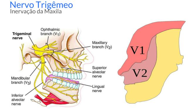 nervo trigemeo