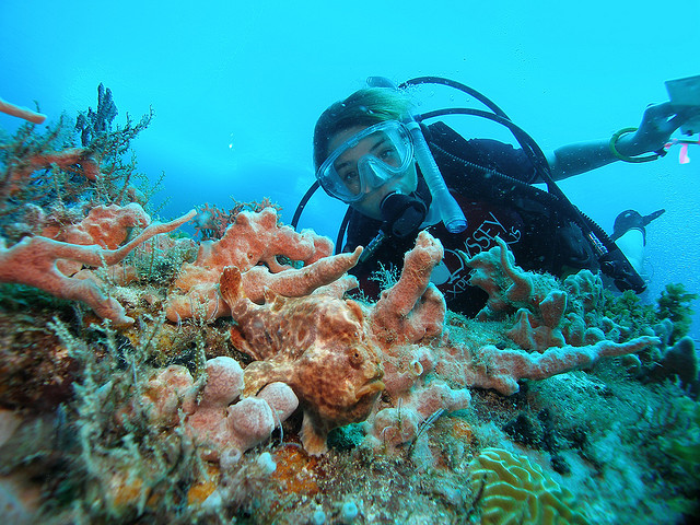 marine biologist career sailing marine biology summer adventures - marine biologist job description