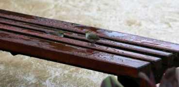 Depasa: plano para abastecimento de água com a vazante das últimas horas (Rio Acre, 18,29m)