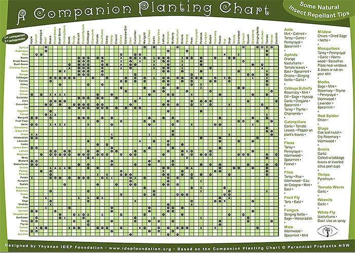 Permaculture Companion Planting Guide Chart FREE PDF - Off Grid World