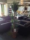WAVEさんから観葉植物をいただきました。ありがとうございます!