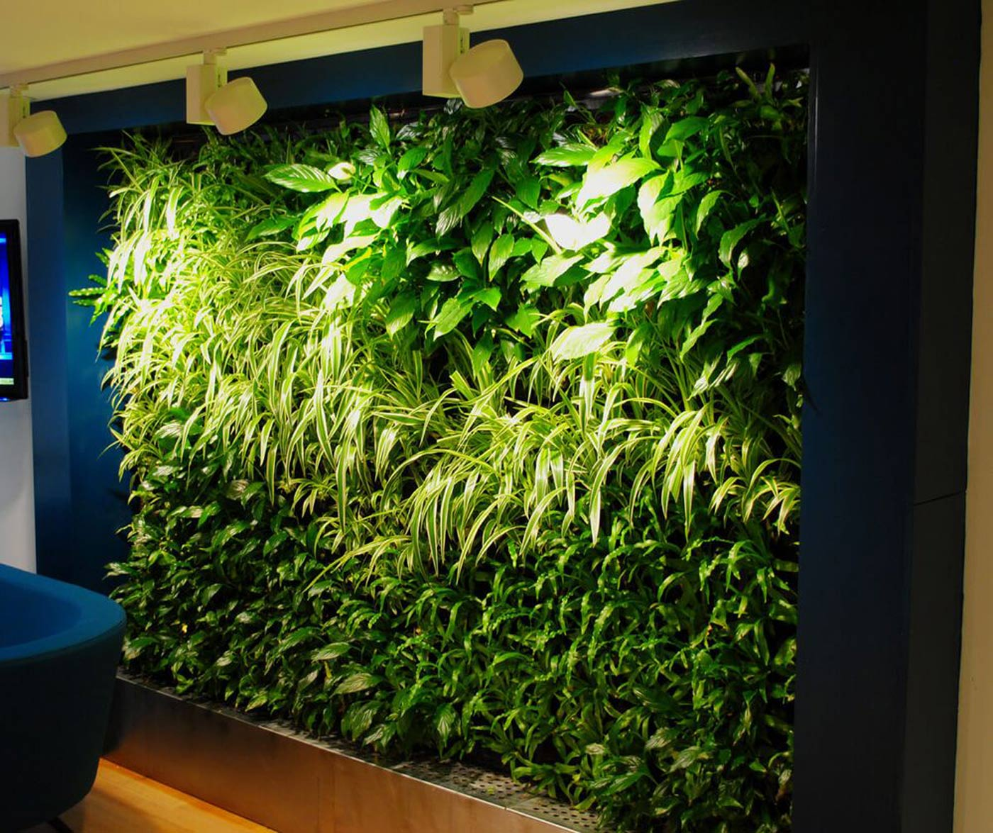 Bepflanzte Wand Green Walls Living Walls Office Landscapes