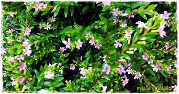 fotos de jardim florido : fotos de jardim florido:Ritual do Jardim Florido para Prosperidade e Proteção. Foto: Rosea