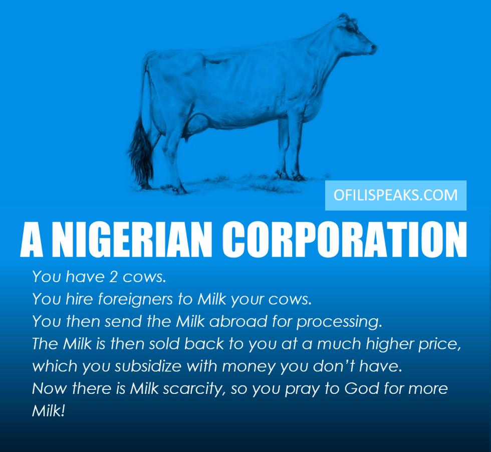 Nigerian Cow 2