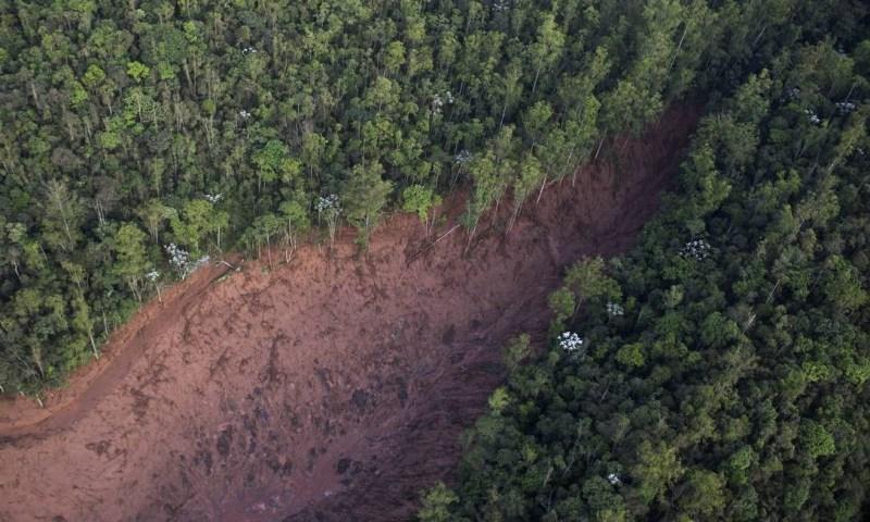Mata destruída pela força da lama enquanto corria na direção de Bento Rodrigues Felipe Dana / AP