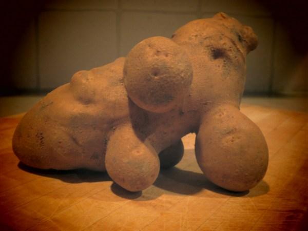20131017 organic potato