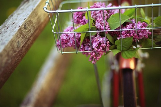 Alicia Block Lilacs {happy weekend!}