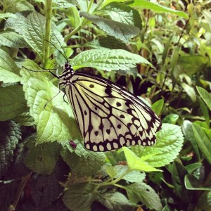 Natural History Museum Butterflies 300x300 {happy weekend!}