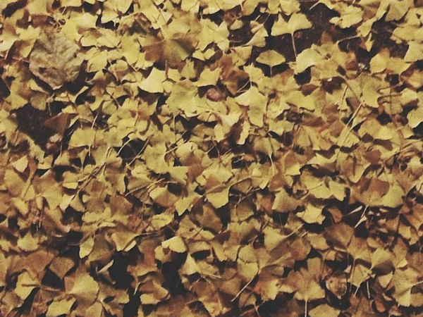 OSBP Ginkgo Leaves {happy weekend!}