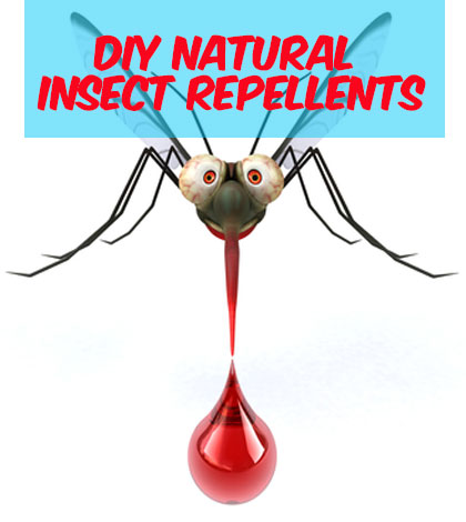Bugged? Here Are Some Vegan Friendly Bug Repellents