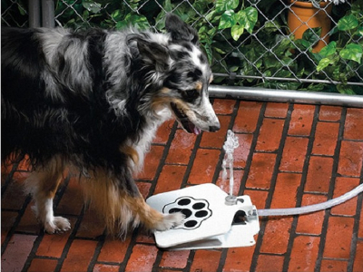 Doggie Water Fountain