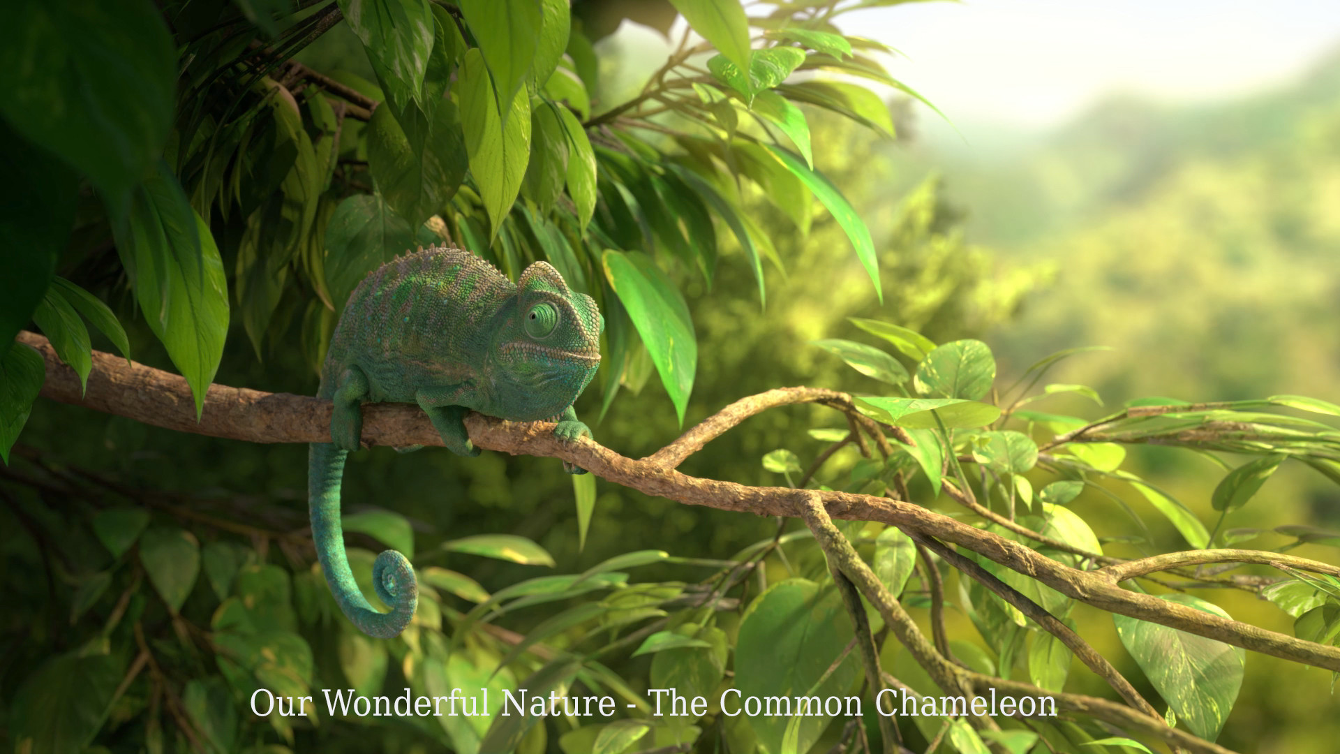 Chameleon Style Our Wonderful Nature The Common Chameleon