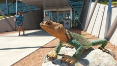 A sculpture of a collard lizard stands guard at the entrance to the Nothwest Libray, in northwest okc of course.  mh