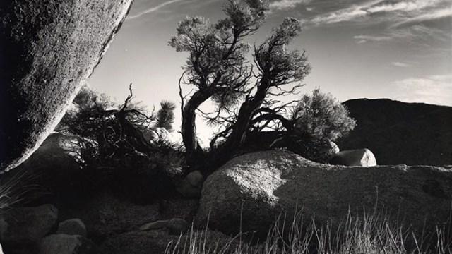 Photograph by Brett WestonOKLAHOMA CITY MUSEUM OF ART / PROVIDED