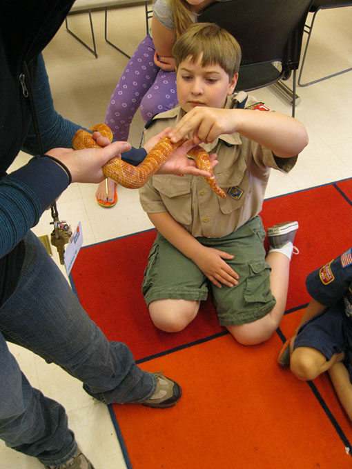 Scouts earn badges, belt loops and pins at Sam Noble Museum. (Sam Noble Museum / provided)