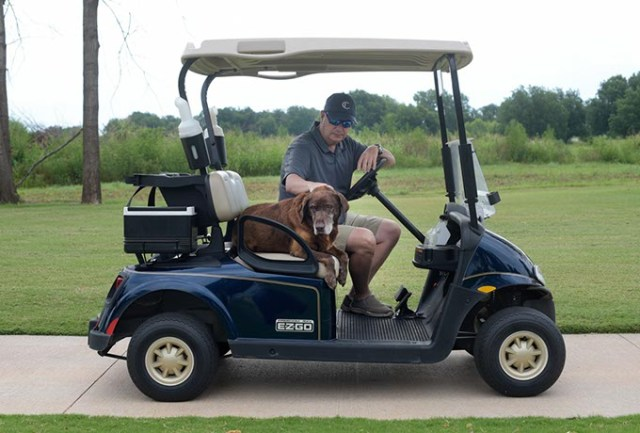 Scout rides on a golf cart with Chris Chesser, golf course director, at Firelake Golf Course in Shawnee.  (Garett Fisbeck)
