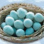 """世界でも珍しい殻の""""青い卵"""""""