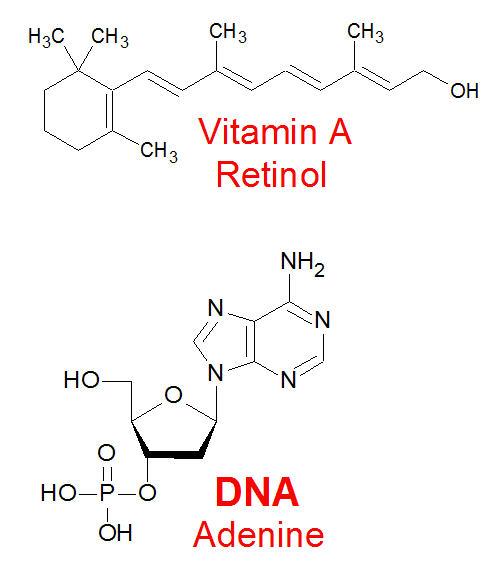 vitamin_dna