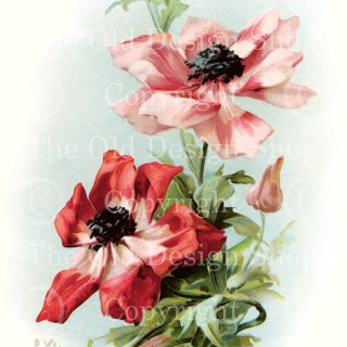 New Vintage Image of Pink/Red Flowers in my Etsy Shop